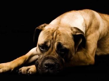 Állatkínzás pszichológiája 1. rész
