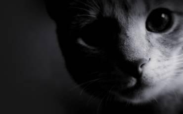 Állatkínzás pszichológiája 2. rész